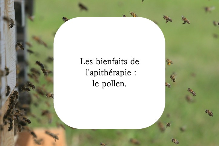 Pollen apithérapie naturopathie